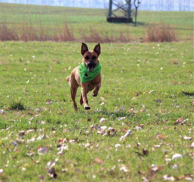 Bildertagebuch - Lina II, ein hübsche Lady die gerne Bällchen spielt und eine hundeerfahrene aktive Familie sucht ...VERMITTELT! 28773434tf