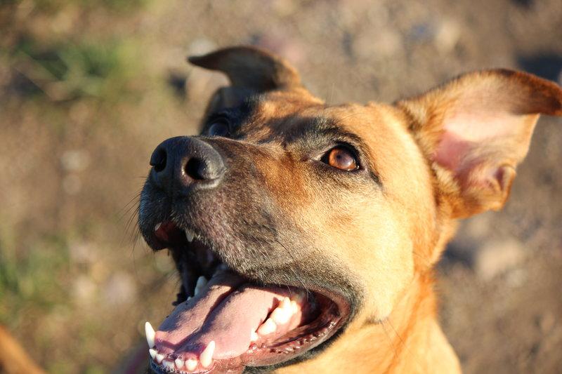 Bildertagebuch - Lina II, ein hübsche Lady die gerne Bällchen spielt und eine hundeerfahrene aktive Familie sucht ...VERMITTELT! 28773729jk