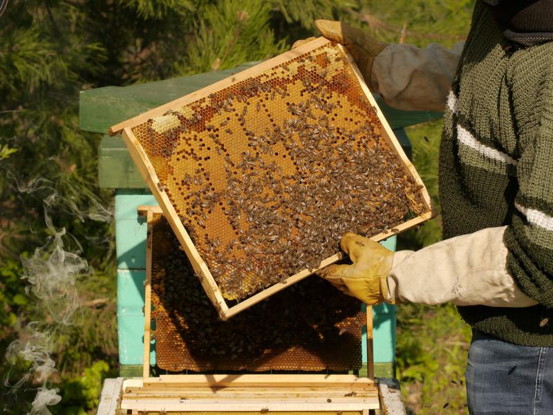 Meg lehet élni a méhészkedésből