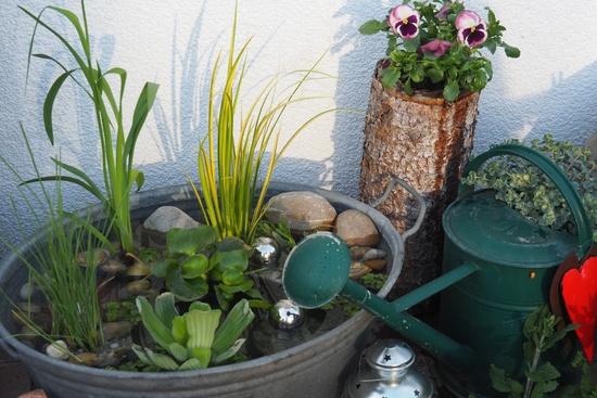 Miniteich auf terrasse seite 1 gartengestaltung mein for Gartengestaltung zinkwanne