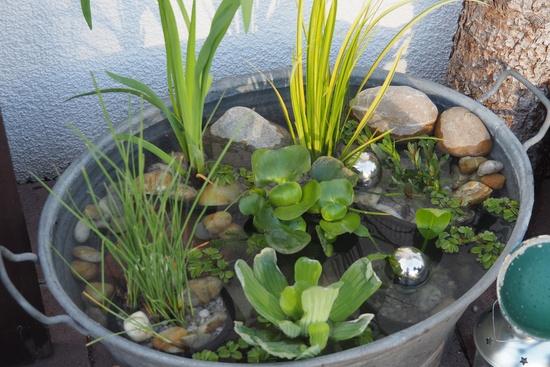 Miniteich auf Terrasse Seite 1 Gartengestaltung Mein schöner Garten online ~ 12021521_Mein Schöner Garten Miniteich