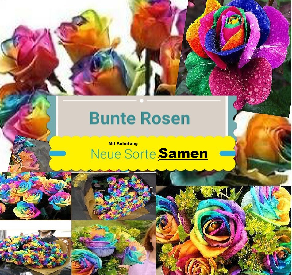 25x regenbogen rosen blumen pflanze anleitung f r die regenbogen rosen samen 48 ebay. Black Bedroom Furniture Sets. Home Design Ideas