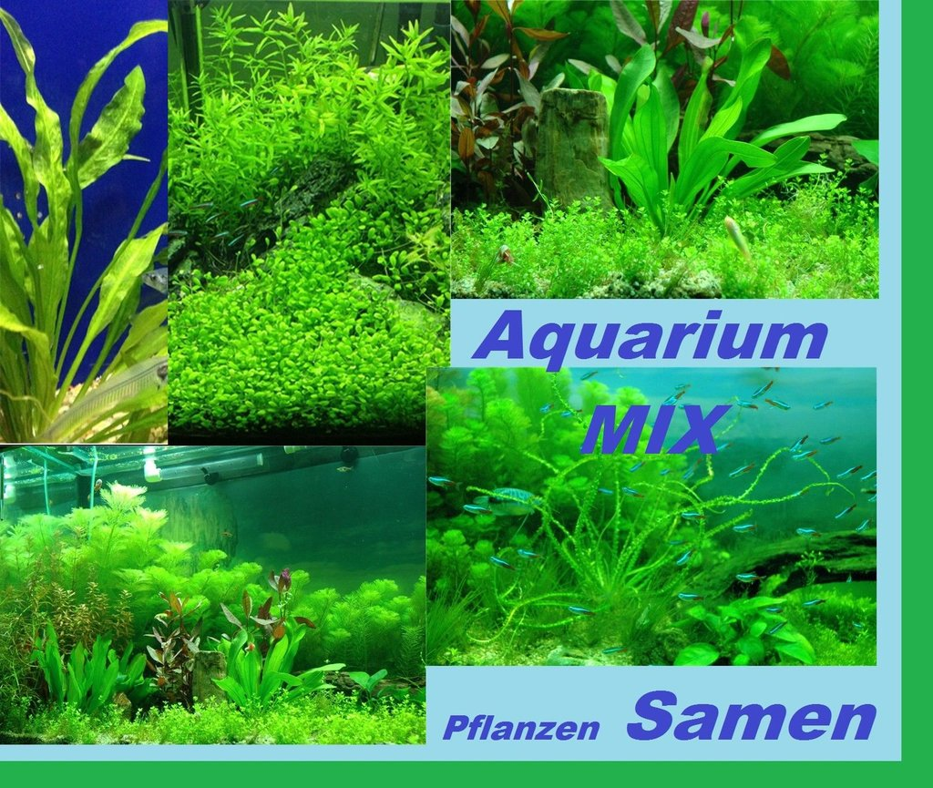 30x aquarium pflanzen samen mix leichte aussaat neuheit. Black Bedroom Furniture Sets. Home Design Ideas