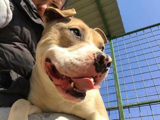 Foltos jetzt Balu lebt glücklich in Österreich 29063283je