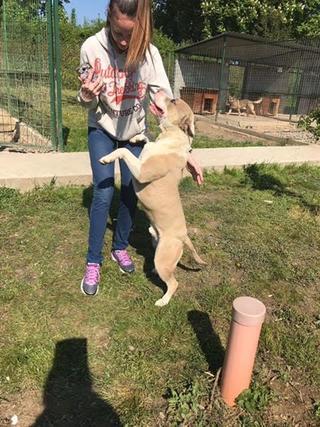 Foltos jetzt Balu lebt glücklich in Österreich 29063286te