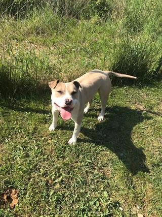 Foltos jetzt Balu lebt glücklich in Österreich 29063287es