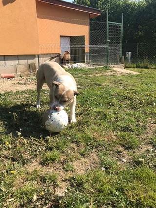 Foltos jetzt Balu lebt glücklich in Österreich 29063289hp