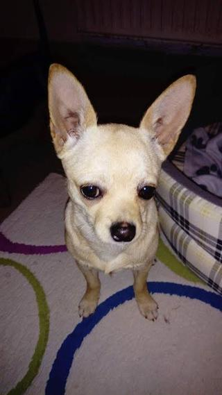 Cleo hat ein neues Zuhause gefunden 29273983rs