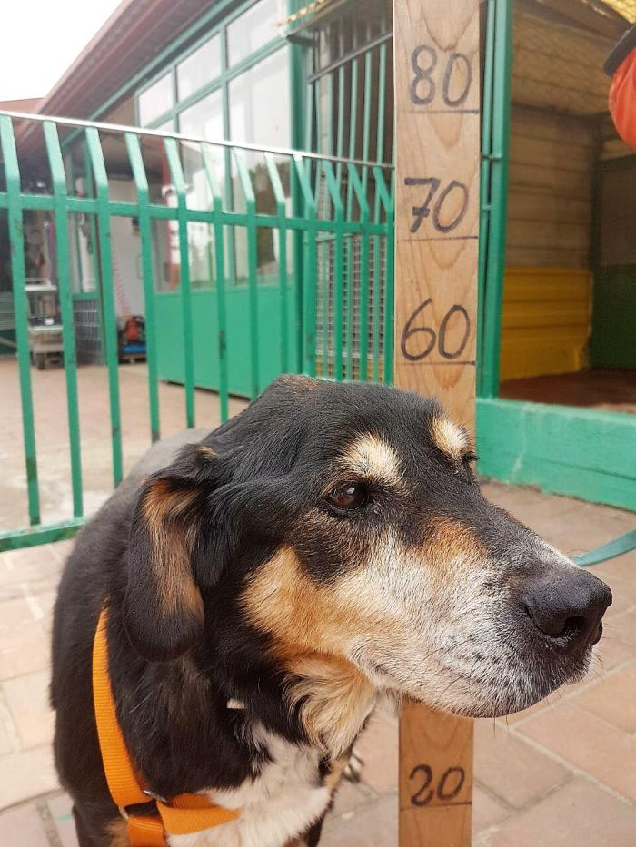 Bildertagebuch - Minerva: entzückenden Hundedame hätte gerne auf ihre alten Tage noch eine Familie! 29370527pv