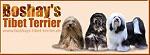 Boshys Tibet Terrier