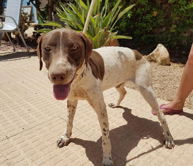 Bildertagebuch - Guiness: ein Hundekumpel fürs Leben - VERMITTELT - 29699990gd