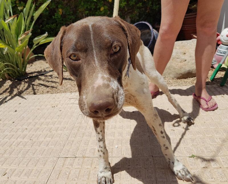 Bildertagebuch - Guiness: ein Hundekumpel fürs Leben - VERMITTELT - 29699997od