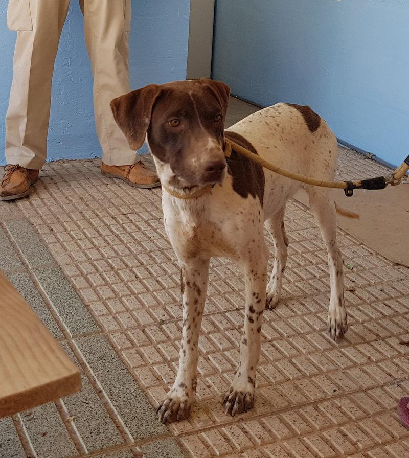 Bildertagebuch - Guiness: ein Hundekumpel fürs Leben - VERMITTELT - 29699999vl