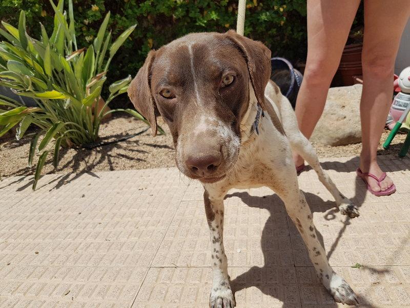 Bildertagebuch - Guiness: ein Hundekumpel fürs Leben - VERMITTELT - 29700000na
