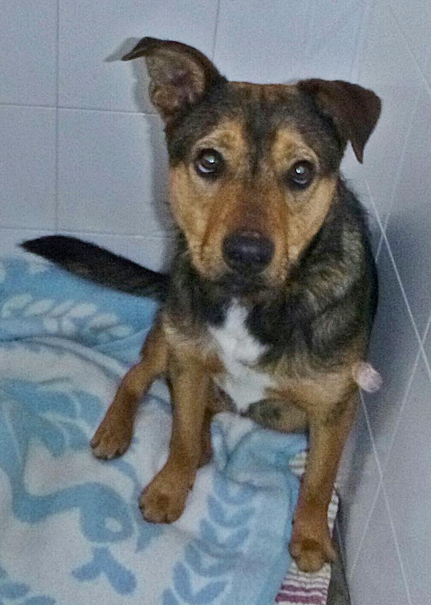 Bildertagebuch - Reex, ein gelehriger, anhänglicher Hundekumpel sucht seine Menschen... 29703497ee
