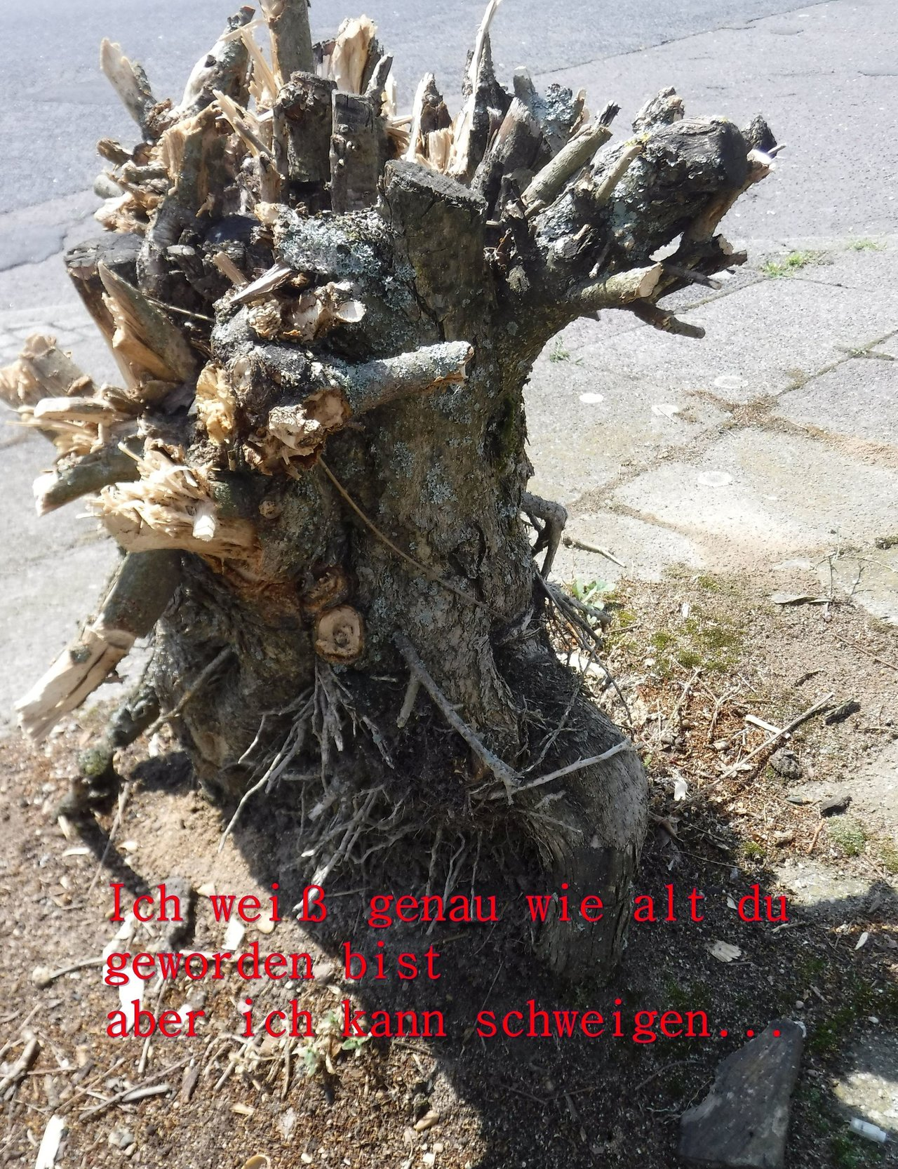 http://up.picr.de/29752135df.jpg