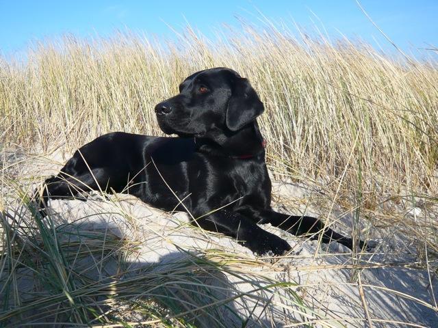 Kletterausrüstung Für Hunde : Hund auf tour fotothread