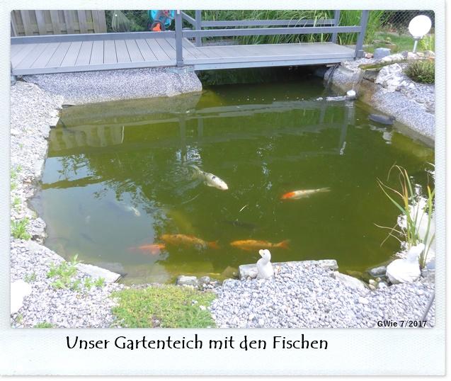 Fische im gartenteich minerva 39 s gartenforum for Fische im gartenteich