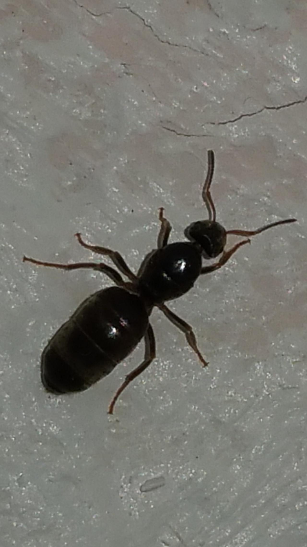 ANTSTORE World of Ants • Thema anzeigen - Seltsame \