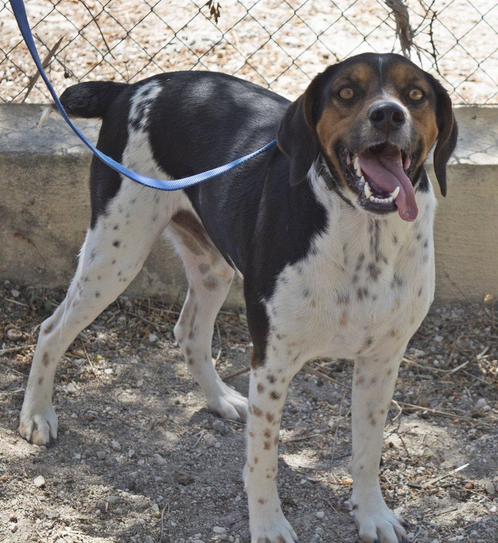 Bildertagebuch - Rio, jung, verspielt und sehr freundlich, warum setzt man so einen Hund nur aus - VERMITTELT! 29854782ty