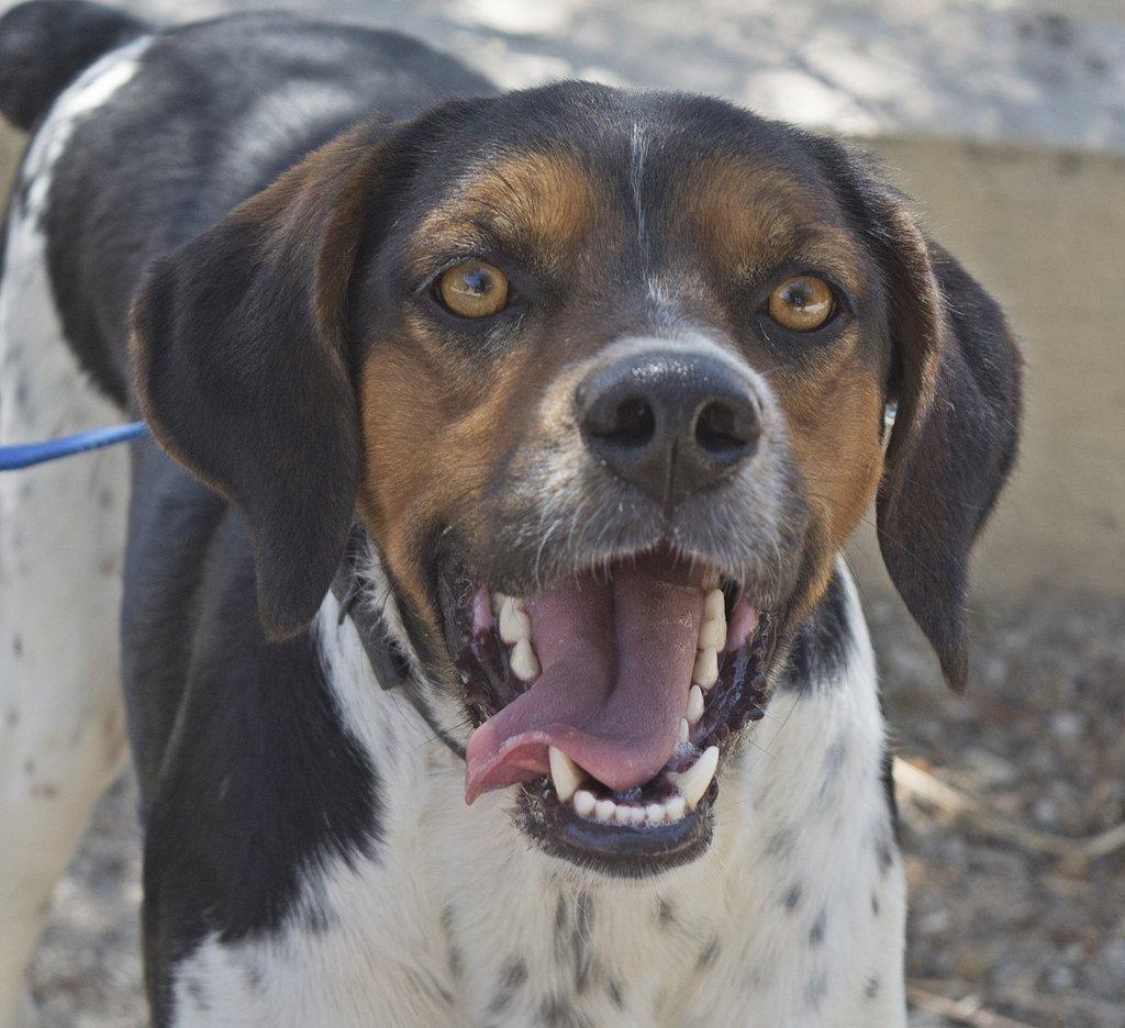 Bildertagebuch - Rio, jung, verspielt und sehr freundlich, warum setzt man so einen Hund nur aus - VERMITTELT! 29854783qm