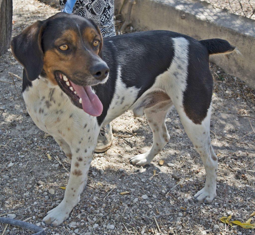 Bildertagebuch - Rio, jung, verspielt und sehr freundlich, warum setzt man so einen Hund nur aus - VERMITTELT! 29854786tw