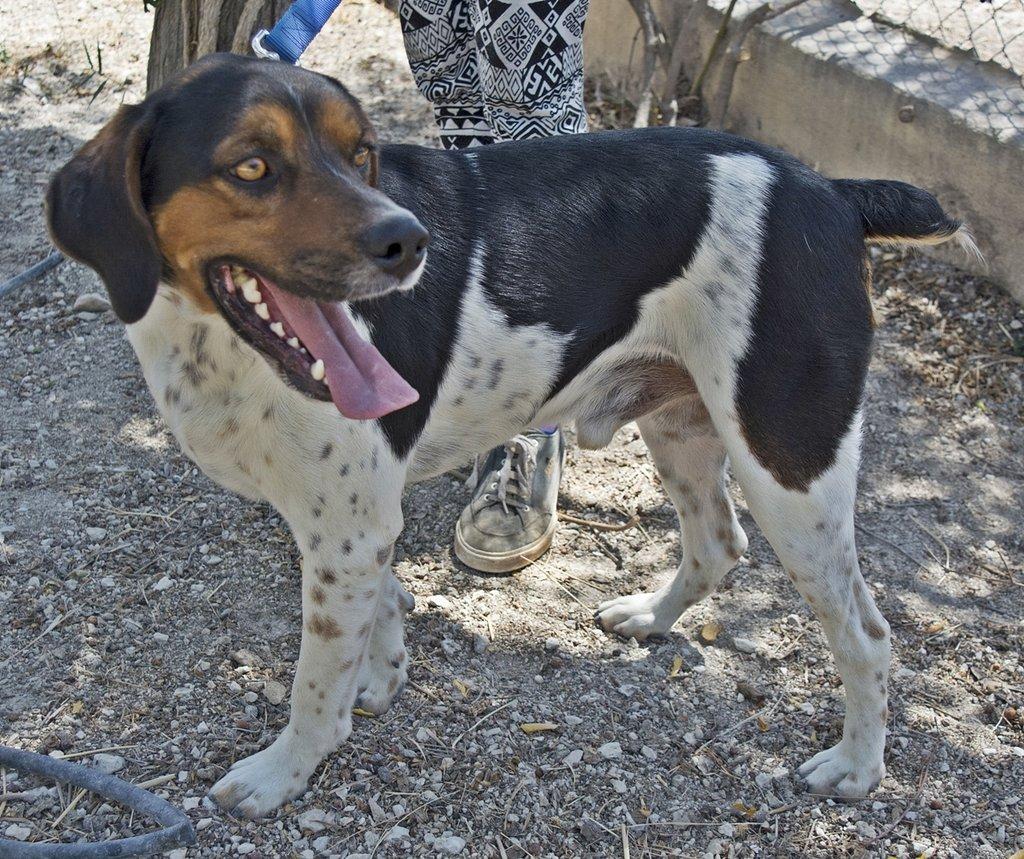 Bildertagebuch - Rio, jung, verspielt und sehr freundlich, warum setzt man so einen Hund nur aus - VERMITTELT! 29854788jq