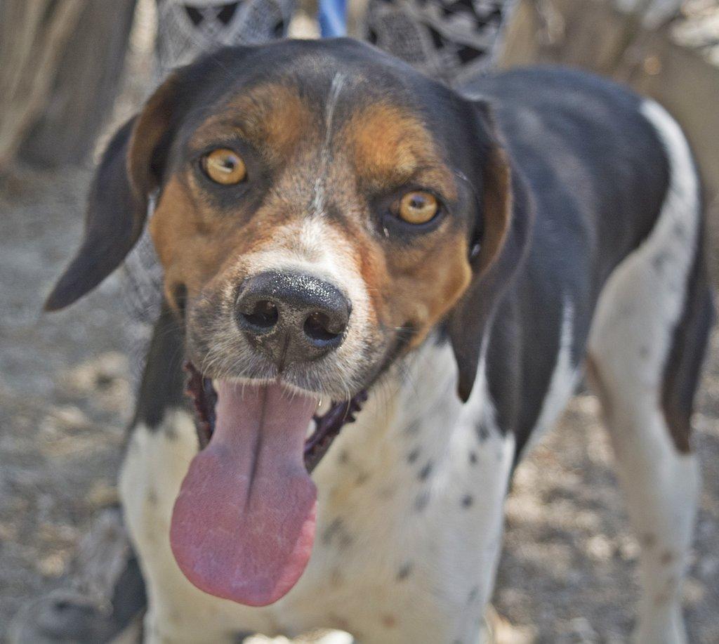 Bildertagebuch - Rio, jung, verspielt und sehr freundlich, warum setzt man so einen Hund nur aus - VERMITTELT! 29854789jx
