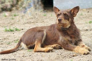 Csoki, Monor lebt jetzt glücklich in Österreich 29968721ru
