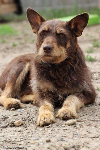 Csoki, Monor lebt jetzt glücklich in Österreich 29968724sd