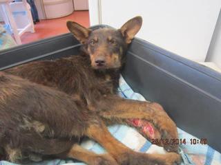 Csoki, Monor lebt jetzt glücklich in Österreich 29968746rc