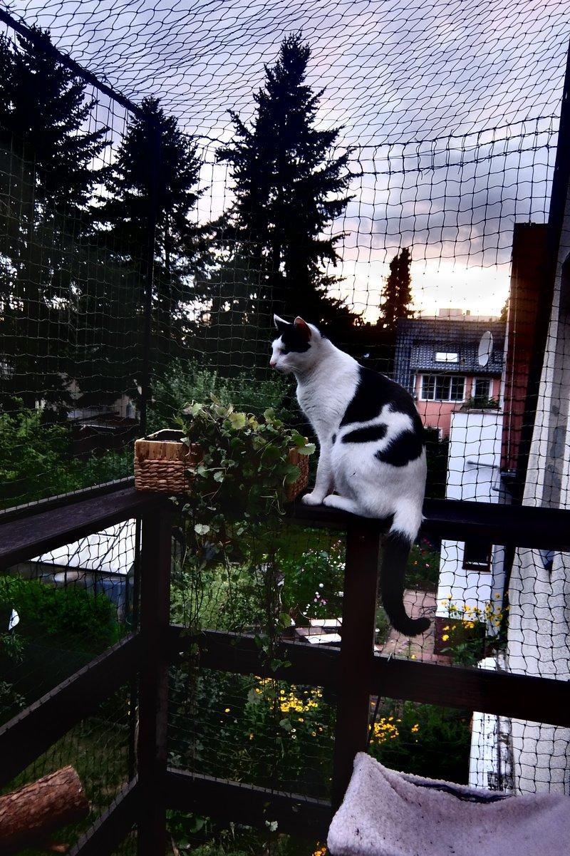 Zeigt Her Eure Gesicherten Balkone Auslaufe Gehege Garten