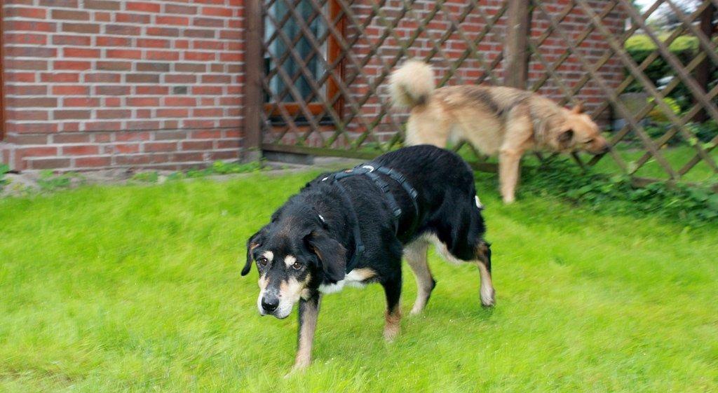 Bildertagebuch - Minerva: entzückenden Hundedame hätte gerne auf ihre alten Tage noch eine Familie! 30101192pv