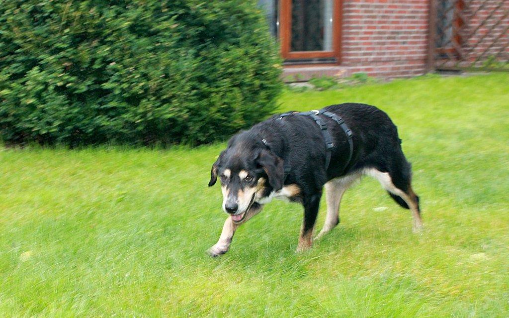 Bildertagebuch - Minerva: entzückenden Hundedame hätte gerne auf ihre alten Tage noch eine Familie! 30101198hx