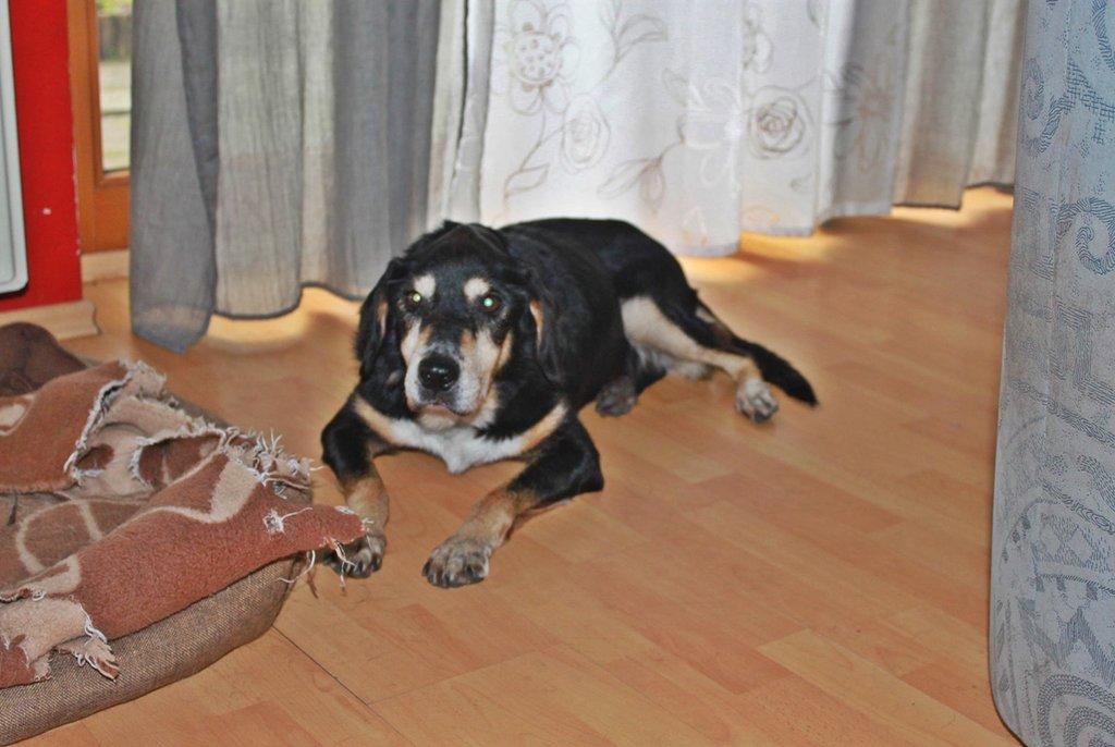 Bildertagebuch - Minerva: entzückenden Hundedame hätte gerne auf ihre alten Tage noch eine Familie! 30101199iw