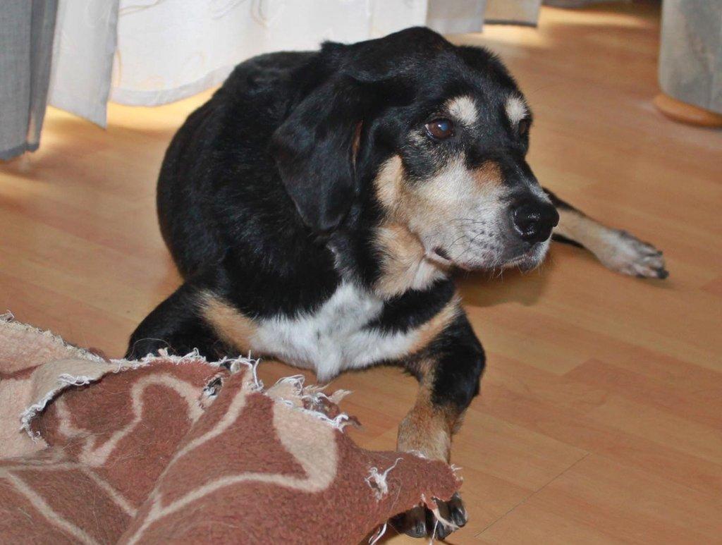 Bildertagebuch - Minerva: entzückenden Hundedame hätte gerne auf ihre alten Tage noch eine Familie! 30101200is