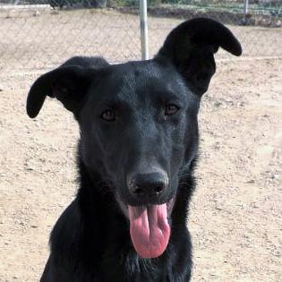 Bildertagebuch - Chico: der perfekte Hund, hübsch, gelehrig, freundlich und immer gut gelaunt! 30105213fv