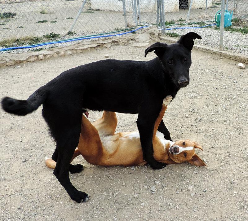 Bildertagebuch - Chico: der perfekte Hund, hübsch, gelehrig, freundlich und immer gut gelaunt! 30105221um