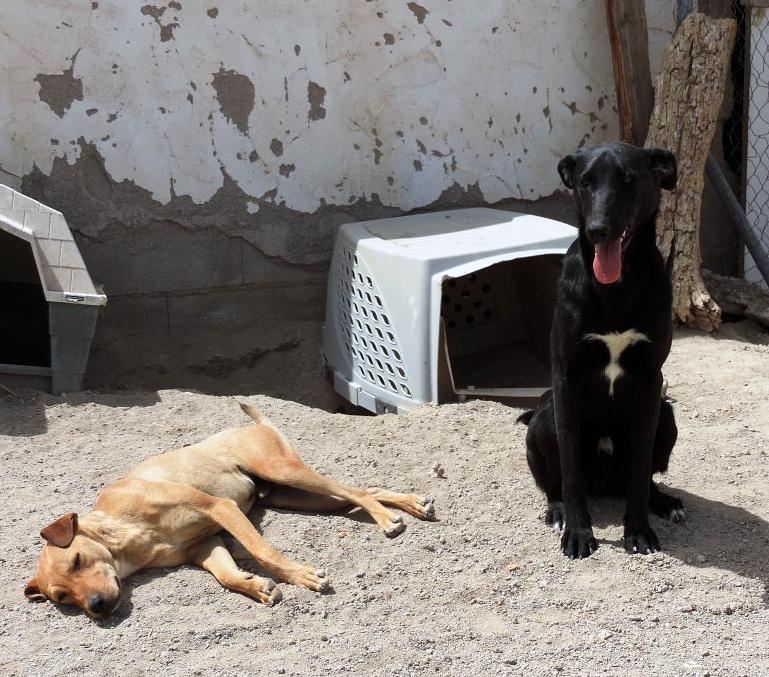 Bildertagebuch - Chico: der perfekte Hund, hübsch, gelehrig, freundlich und immer gut gelaunt! 30105227mv