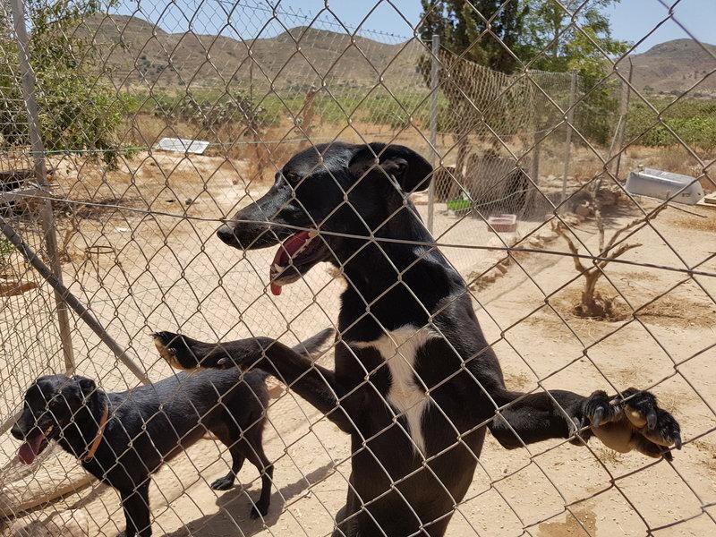 Bildertagebuch - Chico: der perfekte Hund, hübsch, gelehrig, freundlich und immer gut gelaunt! 30105232xw