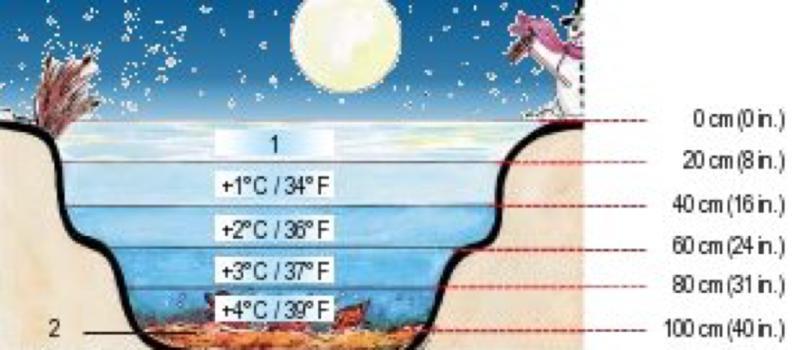 Temperaturzonen im Gartenteich