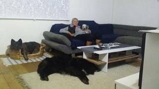 Alf hat ein neues Zuhause gefunden 30389926xk