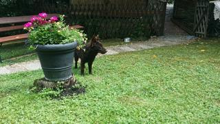 Alf hat ein neues Zuhause gefunden 30389979yx