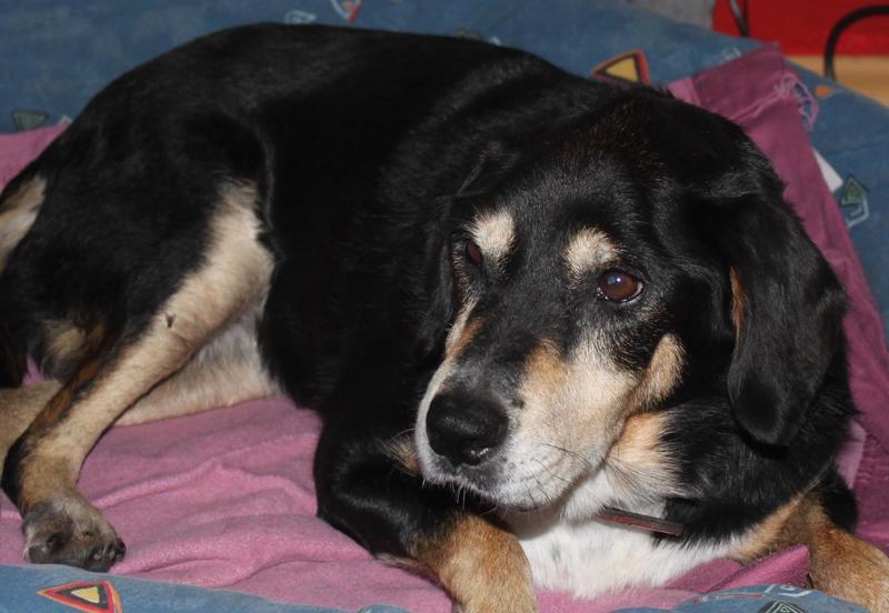 Bildertagebuch - Minerva: entzückenden Hundedame hätte gerne auf ihre alten Tage noch eine Familie! 30407326xg