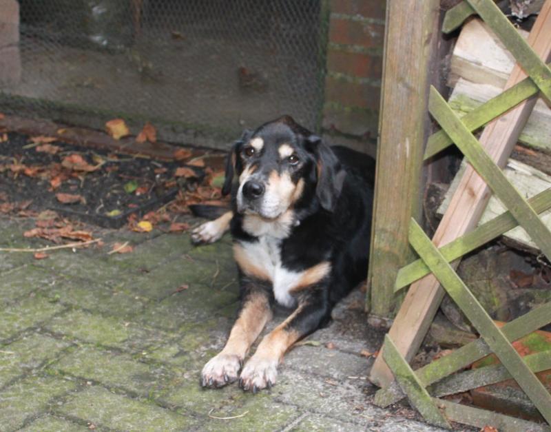 Bildertagebuch - Minerva: entzückenden Hundedame hätte gerne auf ihre alten Tage noch eine Familie! 30407328ox
