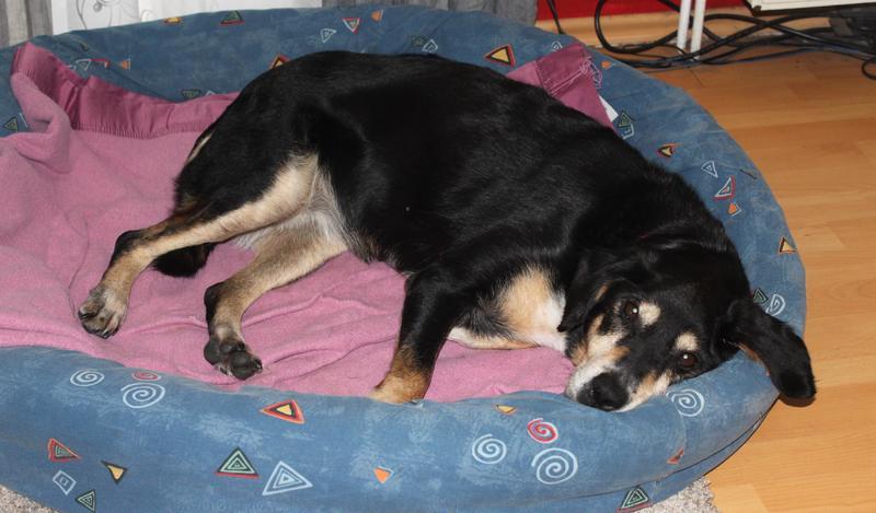 Bildertagebuch - Minerva: entzückenden Hundedame hätte gerne auf ihre alten Tage noch eine Familie! 30407330zm