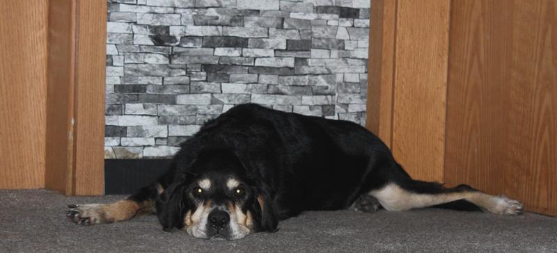 Bildertagebuch - Minerva: entzückenden Hundedame hätte gerne auf ihre alten Tage noch eine Familie! 30407336ir