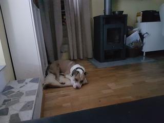 Foltos jetzt Balu lebt glücklich in Österreich 30418236yy