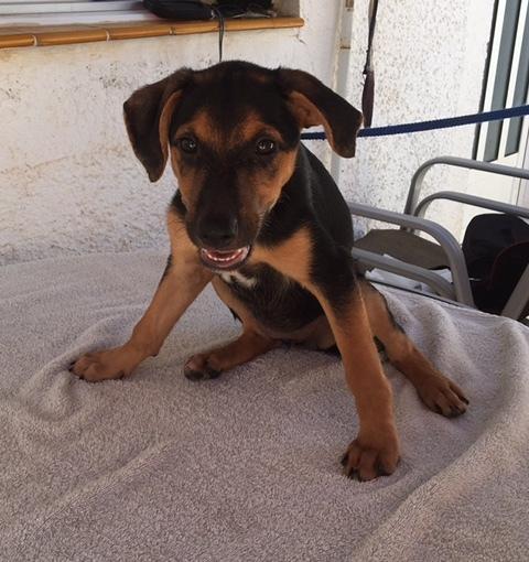 Bildertagebuch - Hannah (Storm), Sie sind auf der Suche nach einem kleinen Hundemädchen das Ihr Leben bereichern soll ? VERMITTELTT! 30425627ps