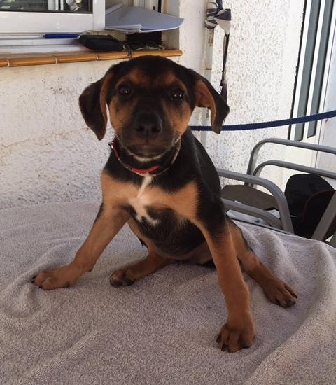 Bildertagebuch - Hannah (Storm), Sie sind auf der Suche nach einem kleinen Hundemädchen das Ihr Leben bereichern soll ? VERMITTELTT! 30425628fy